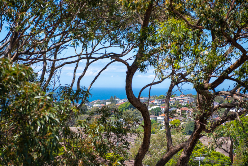 Ocean Park, Waverley